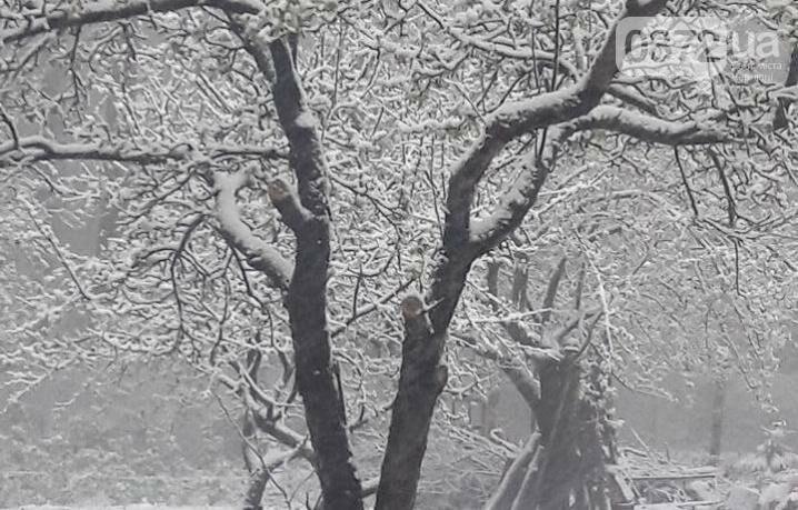 Буковину засипає снігом (фото), фото-1