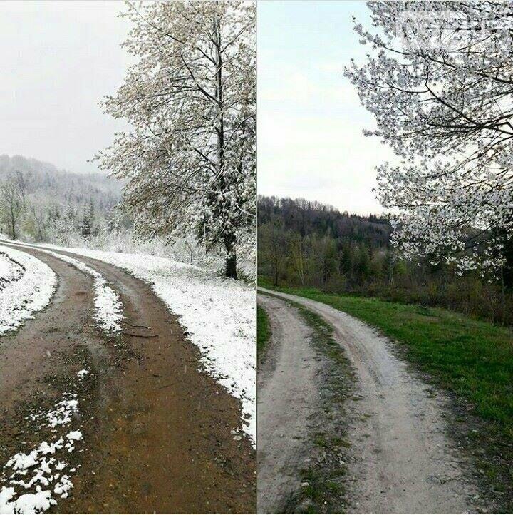 Буковину засипає снігом (фото), фото-4
