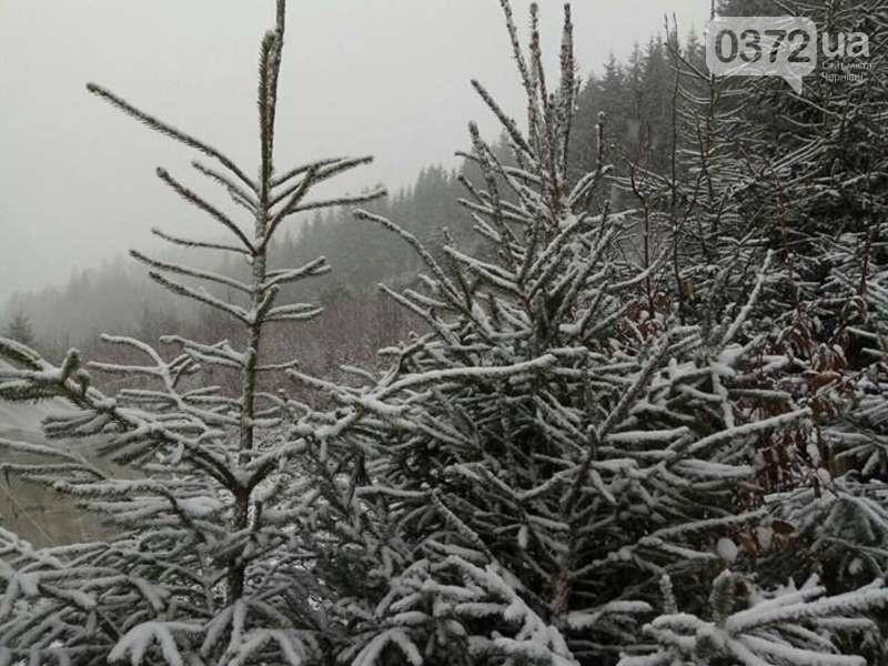 Буковину засипає снігом (фото), фото-6
