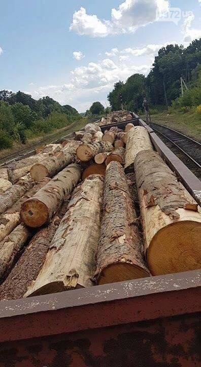 На Буковині український кругляк контрабандисти намагалися вивезти за кордон як німецький ліс (фото), фото-4