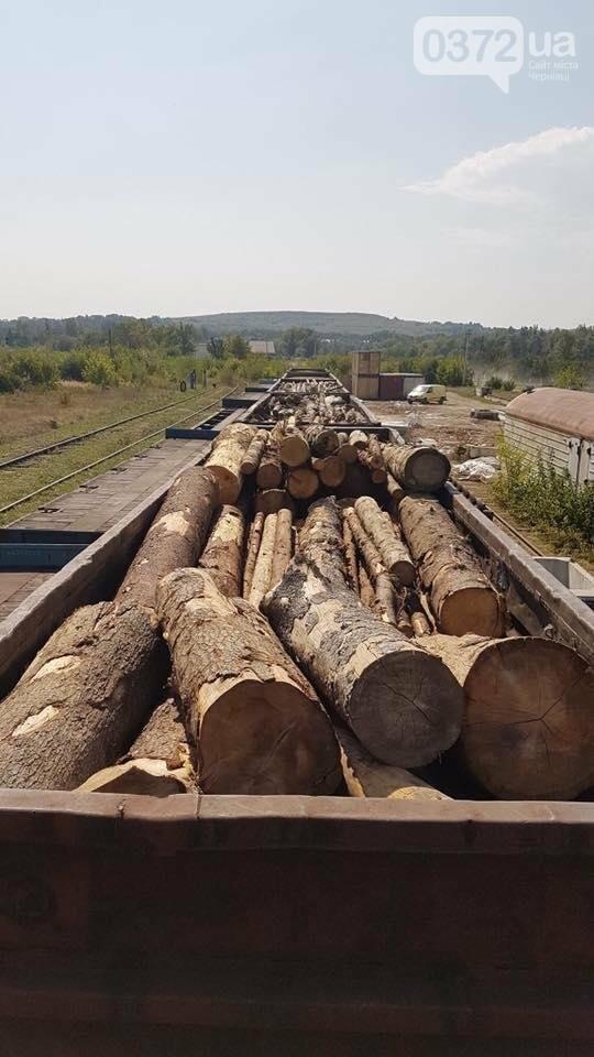 На Буковині український кругляк контрабандисти намагалися вивезти за кордон як німецький ліс (фото), фото-6
