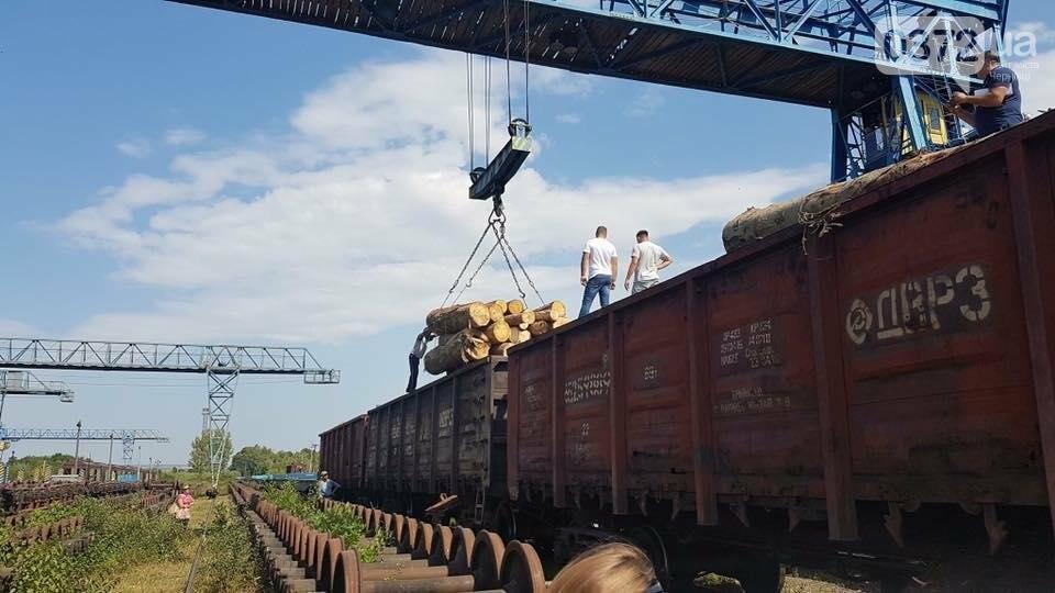 На Буковині український кругляк контрабандисти намагалися вивезти за кордон як німецький ліс (фото), фото-1