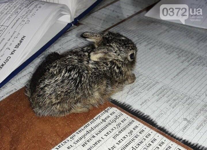Врятували зайченя: на Буковині під час спалювання сухої трави, фото-1
