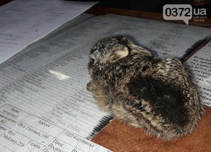 Врятували зайченя: на Буковині під час спалювання сухої трави, фото-2