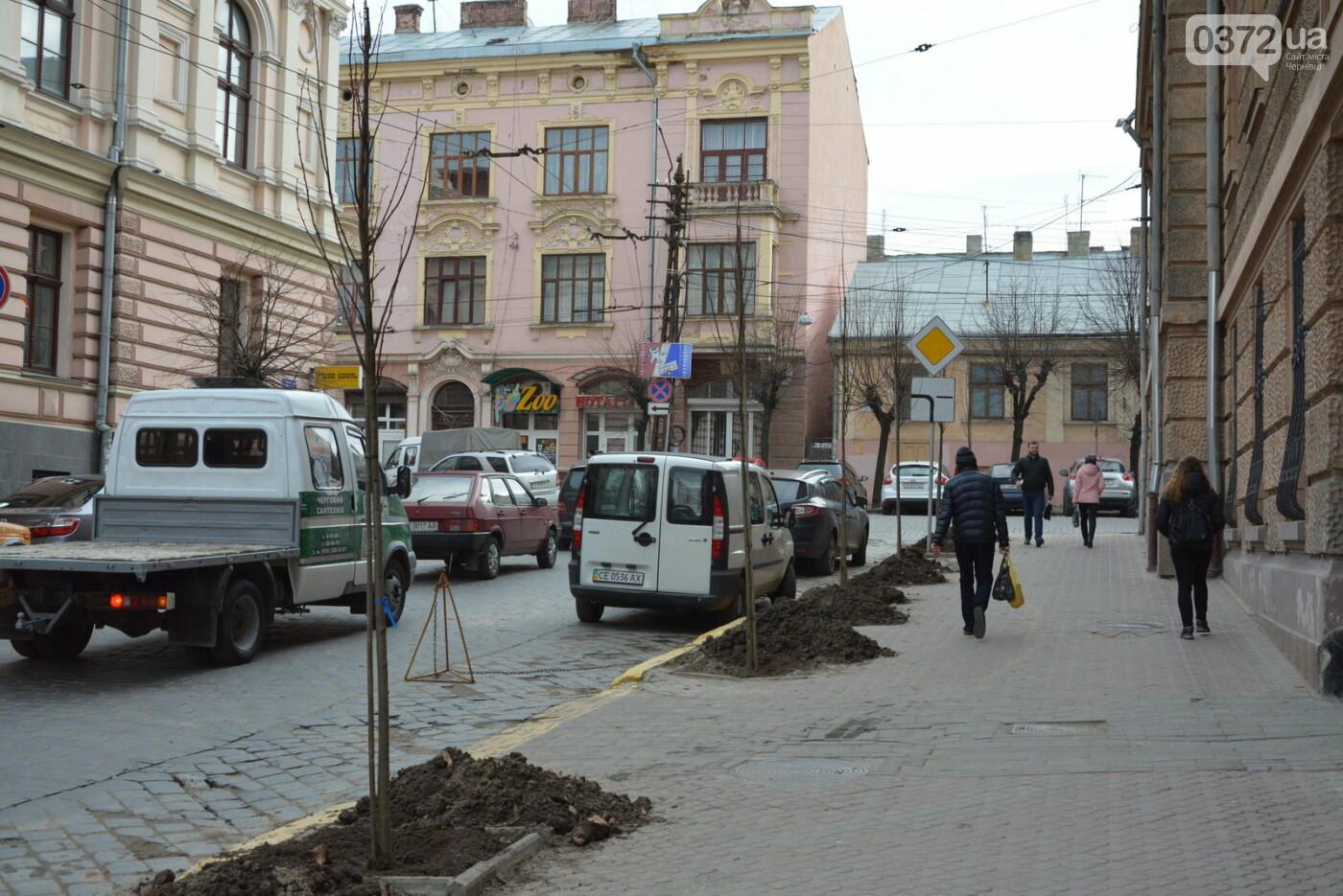 В Чернівцях озеленили центральну частину міста, фото-2
