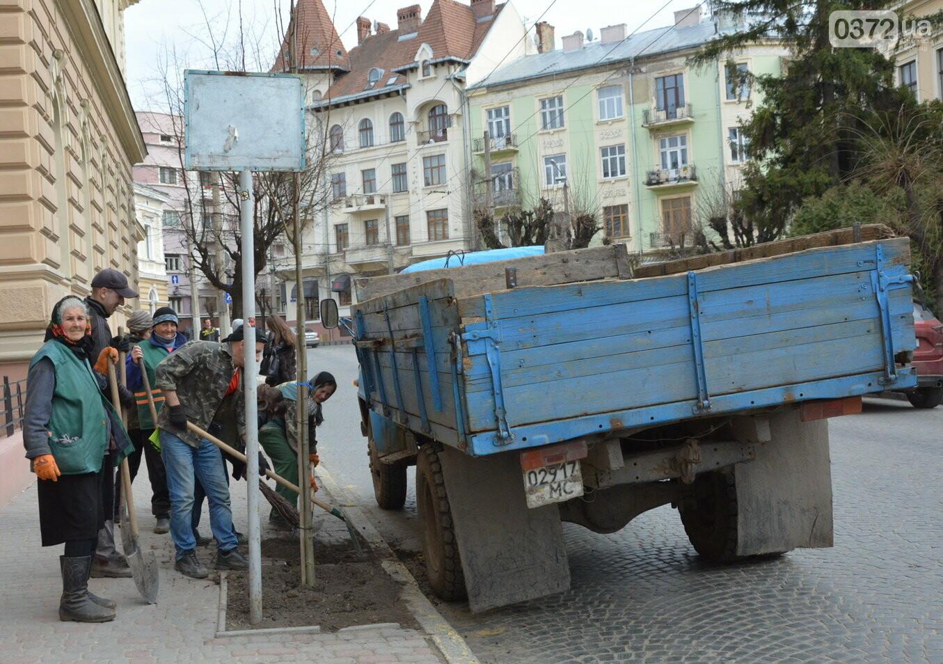 В Чернівцях озеленили центральну частину міста, фото-1