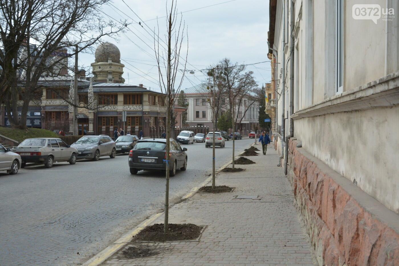 В Чернівцях озеленили центральну частину міста, фото-3