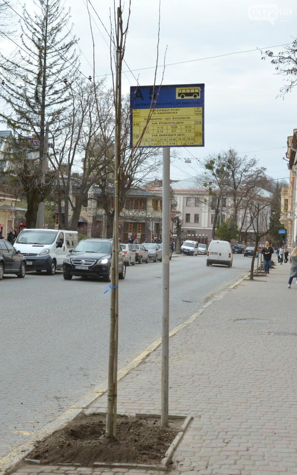 В Чернівцях озеленили центральну частину міста, фото-5