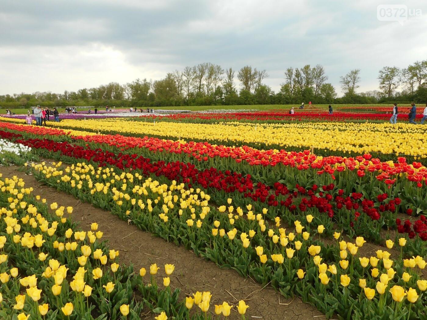 На Буковині провели родинне свято в Долині тюльпанів, фото-34