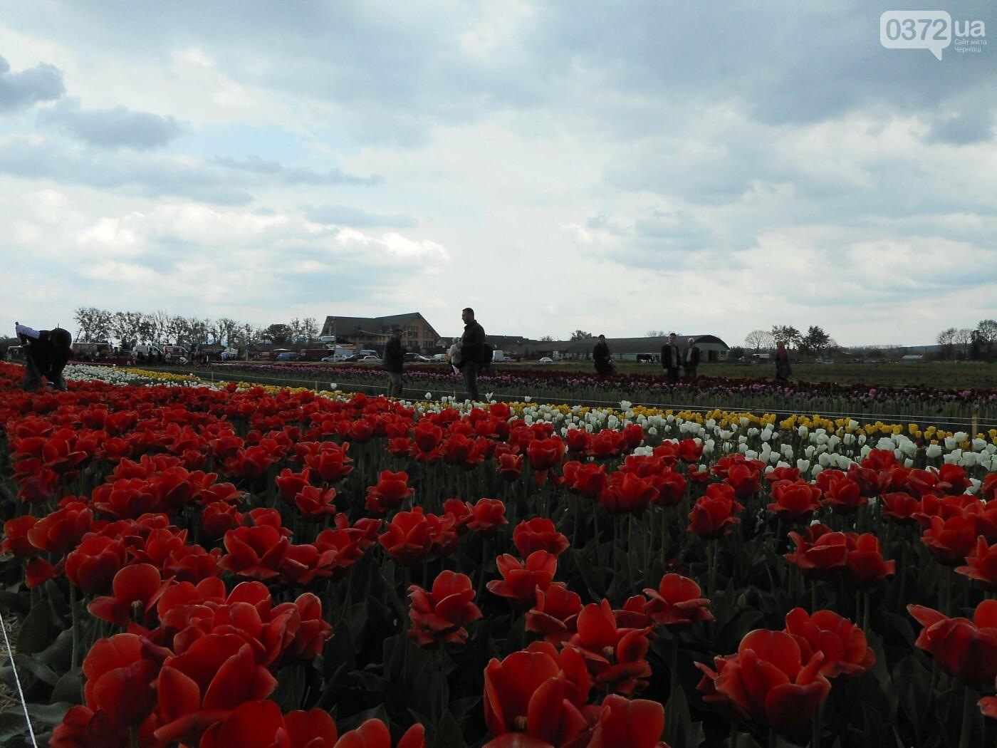 На Буковині провели родинне свято в Долині тюльпанів, фото-35