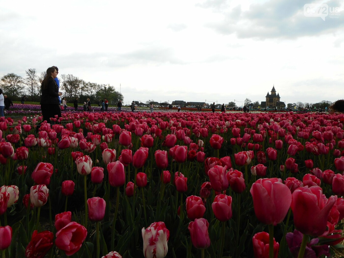 На Буковині провели родинне свято в Долині тюльпанів, фото-36