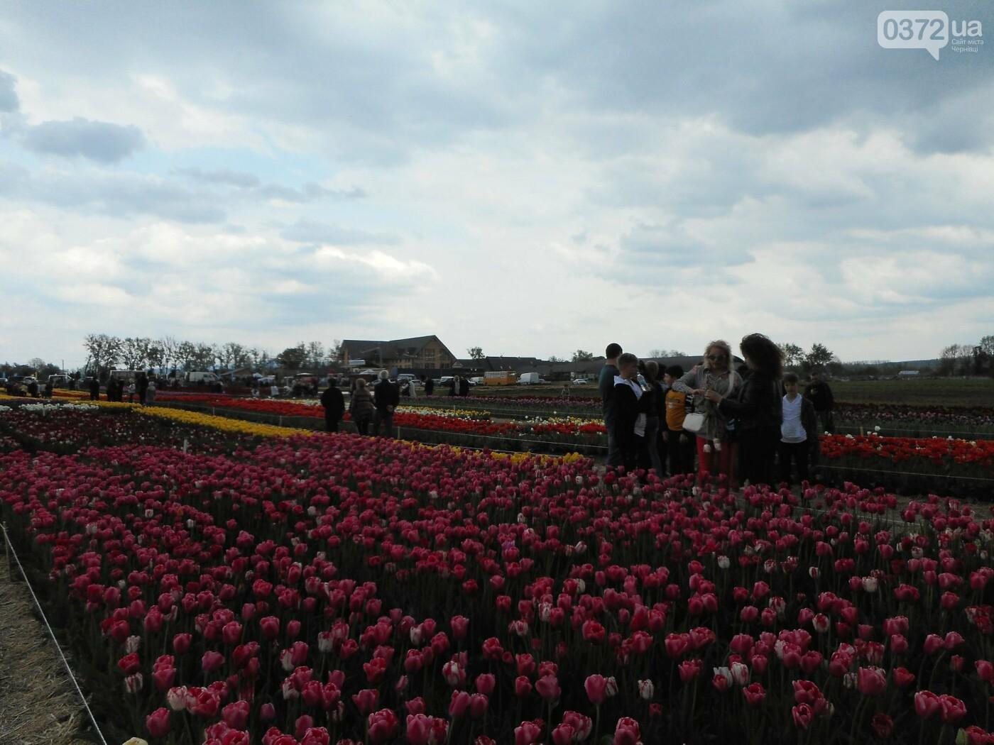На Буковині провели родинне свято в Долині тюльпанів, фото-37