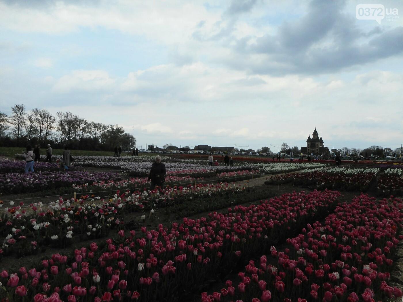 На Буковині провели родинне свято в Долині тюльпанів, фото-38