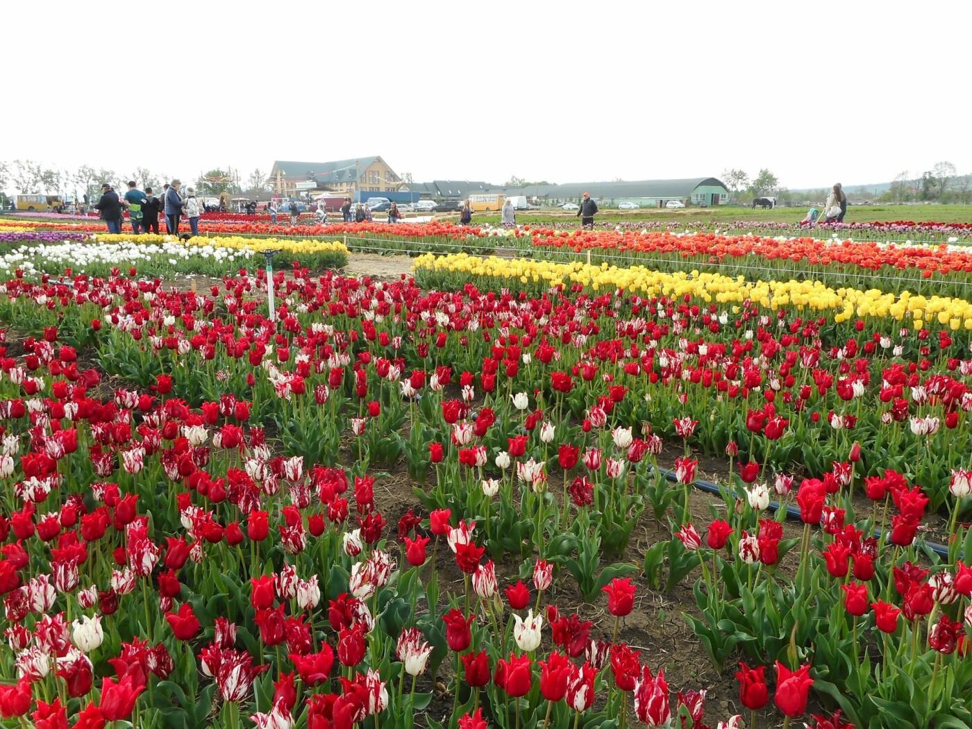 На Буковині провели родинне свято в Долині тюльпанів, фото-39