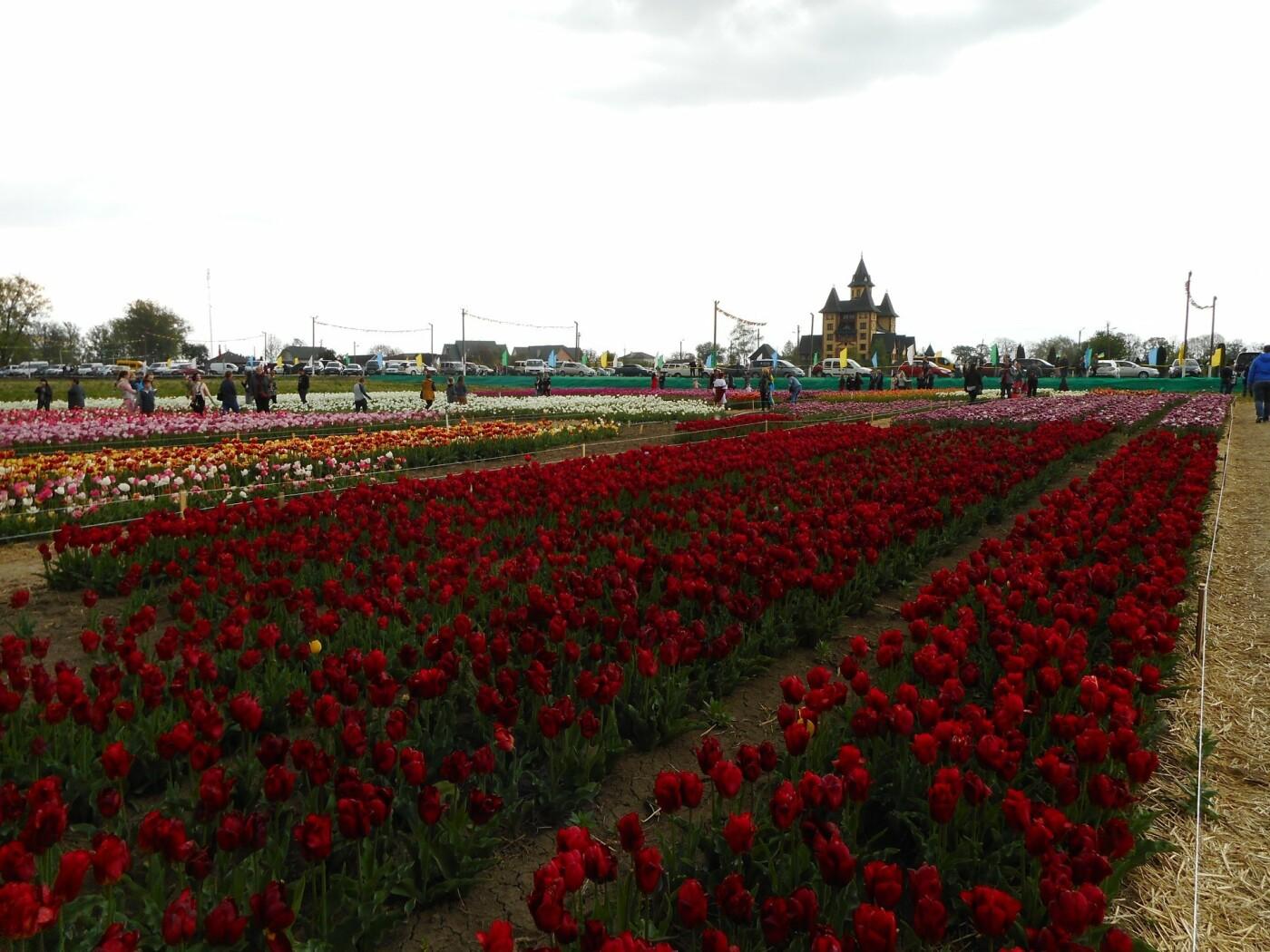 На Буковині провели родинне свято в Долині тюльпанів, фото-40