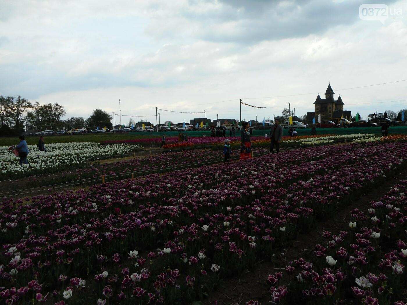На Буковині провели родинне свято в Долині тюльпанів, фото-41