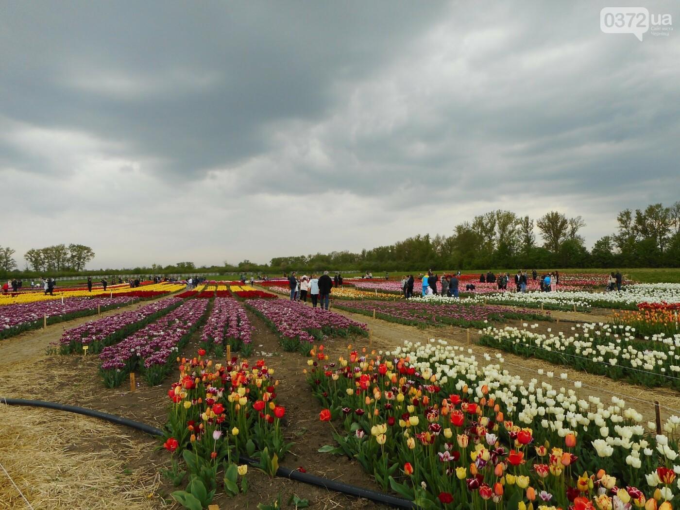 На Буковині провели родинне свято в Долині тюльпанів, фото-42