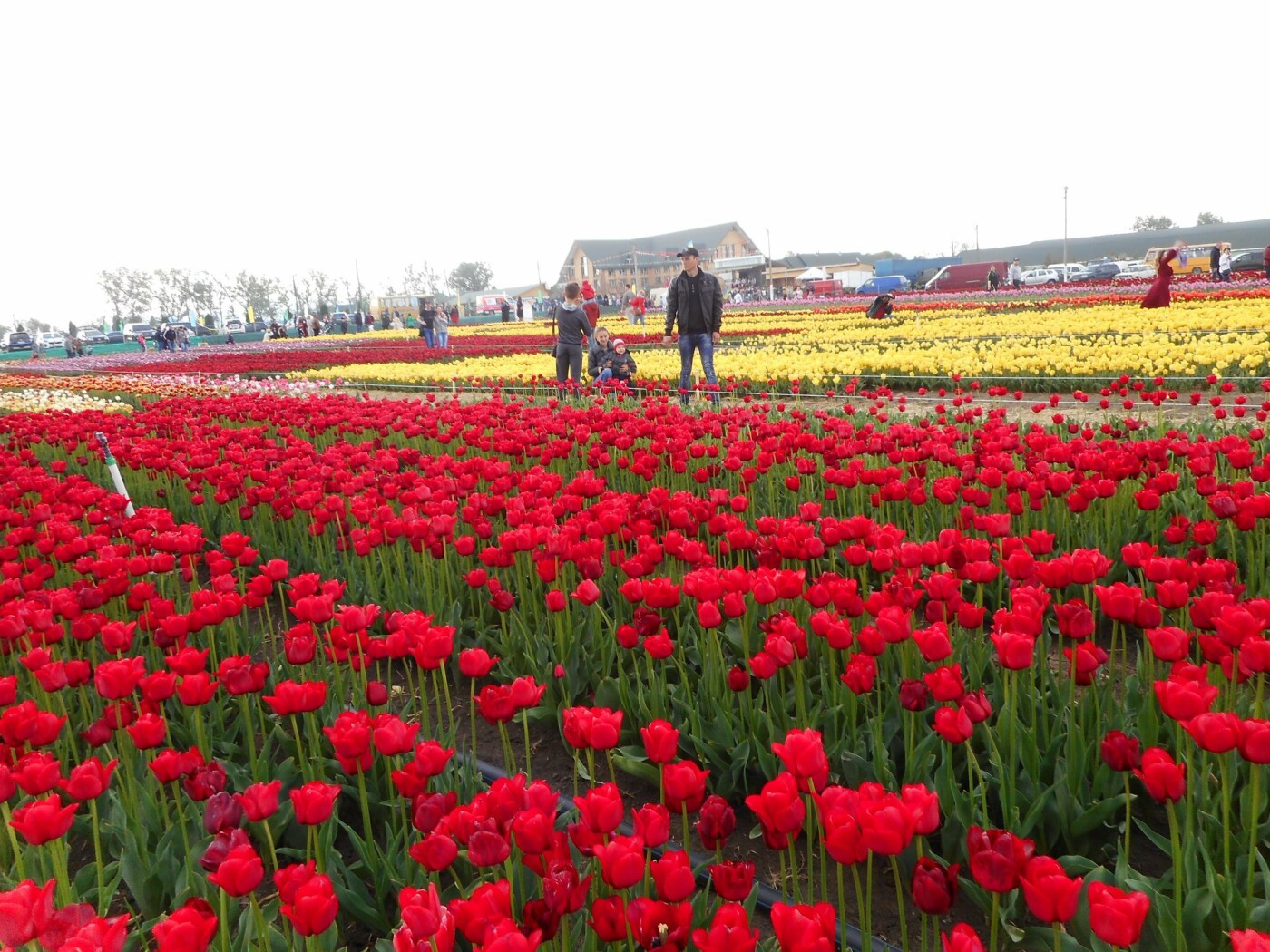 На Буковині провели родинне свято в Долині тюльпанів, фото-43