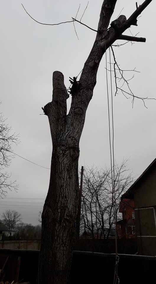 Спилювання дерев Чернівці, Західпромальп