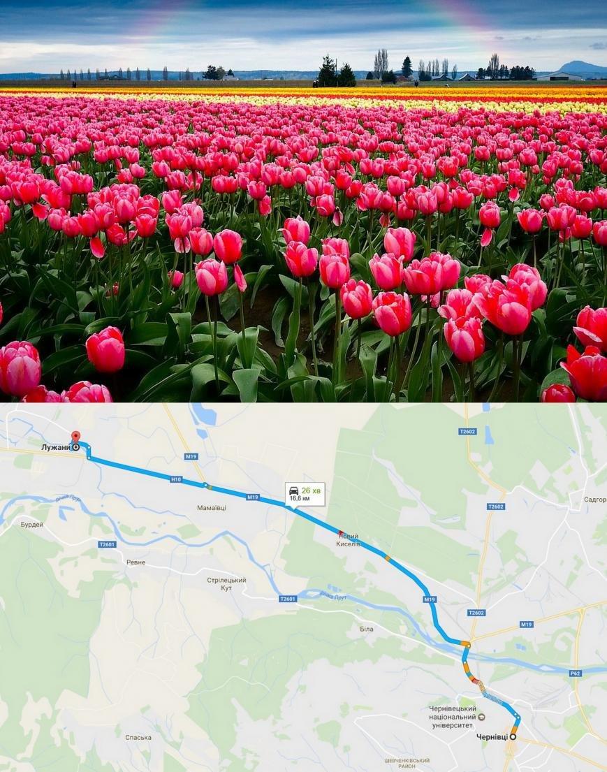 долина тюльпанів - 0372