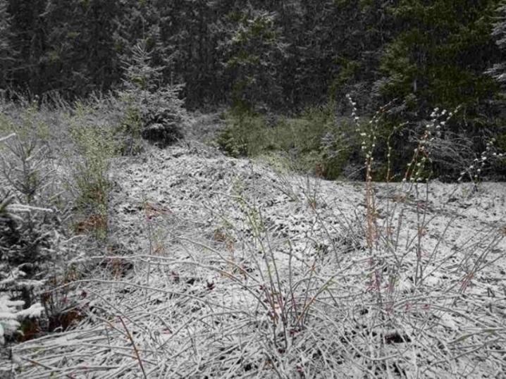 На Буковині випав сніг (ФОТО), фото-2