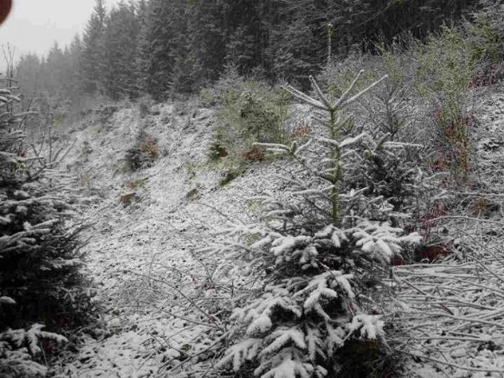 На Буковині випав сніг (ФОТО), фото-1