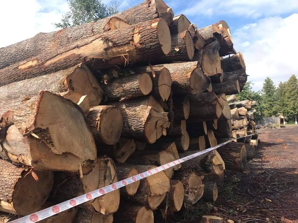 Поблизу Чернівців було виявлено склад нелегальної деревини (фото), фото-1