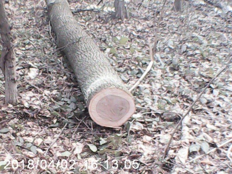 На Буковині затримали нелегального лісоруба (фото), фото-2
