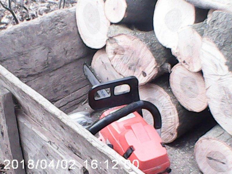 На Буковині затримали нелегального лісоруба (фото), фото-1