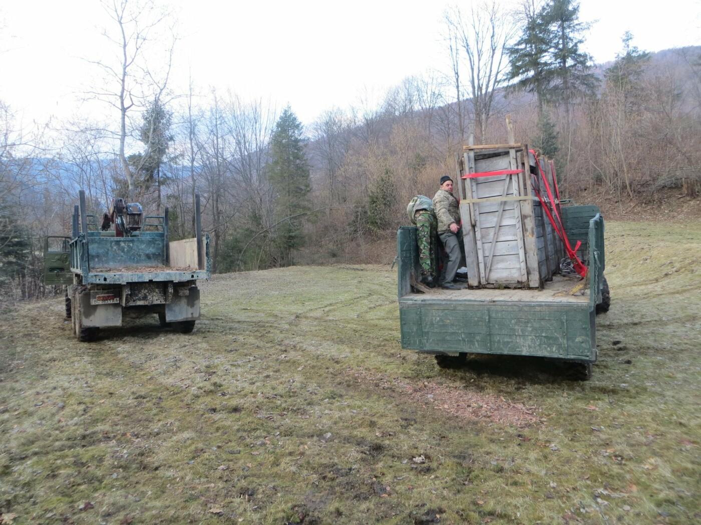 На Сторожинеччину завезли зубра із австрійко-німецьким корінням, фото-1