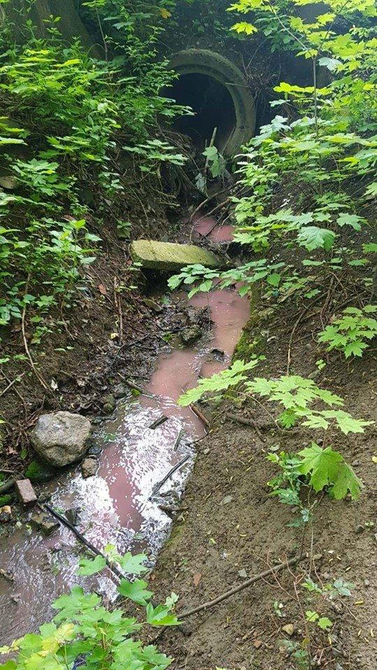 """В озеро у чернівецькому парку """"Жовтневий"""" злили хімікати, фото-1"""