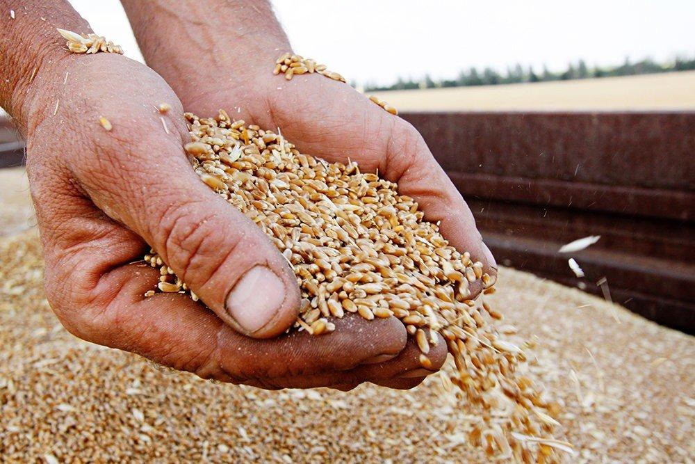 Урожай зернових