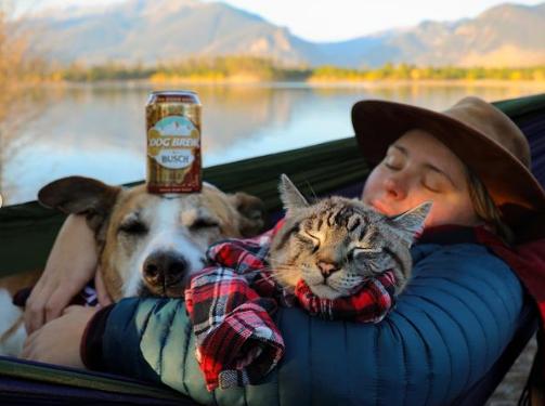 Дружба між собакою та котом – існує: фото наймиліших мандрівників буковинцям, фото-1