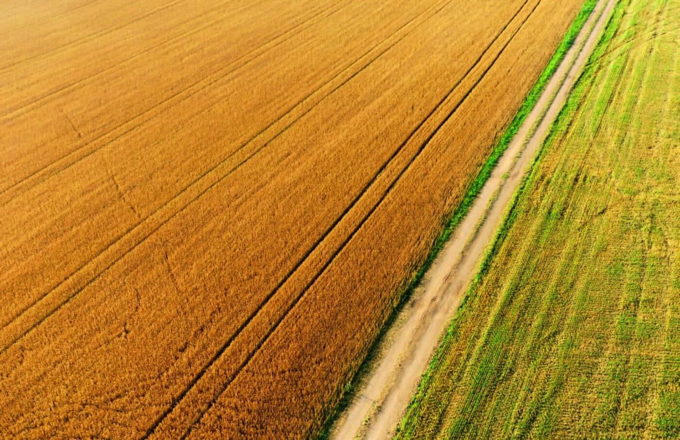 Мішки зерна замість грошей: чому мораторій на продаж землі буксує розвиток сіл Чернівеччини , фото-1