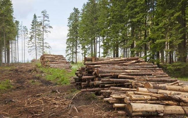 Два з половиною мільйона гривень за вирубку лісів – рішення буковинського суду , фото-1, фото з відкритих джерел