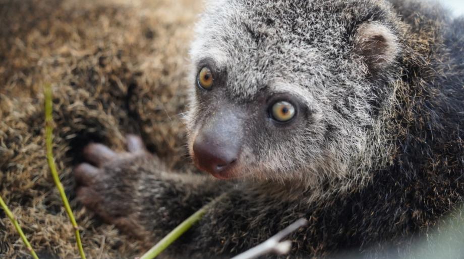 Вроцлавський зоопарк показав рідкісне звіреня: фото буковинцям, фото-1