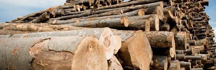 У лісгоспах Буковини працюють десять деревообробних комплексів, Tetiana Gh